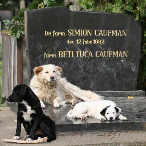 Cemetery Dogs, Iasi, Romania